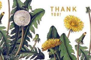 Thank-you-from-the-Herbal-Academy-Thank-an-herbalist-day-e1429219284217